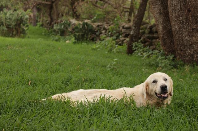 dog-2530510_640